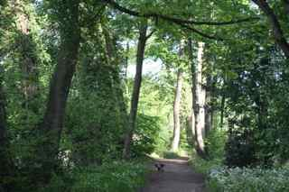 woodland at Deepdale
